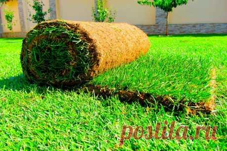 Экологичный рулонный или практичный искусственный газон: какой из вариантов лучше и почему?