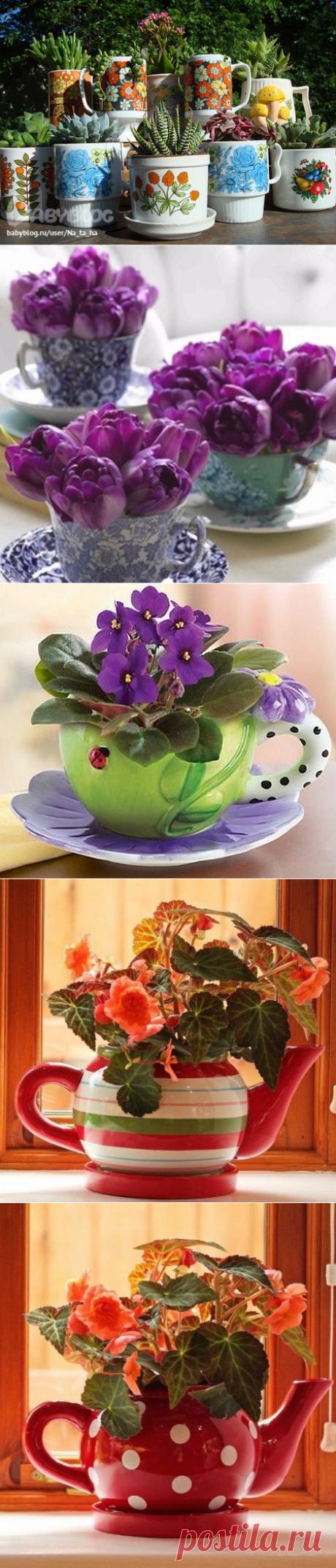 Красивые идеи для цветов на кухню.