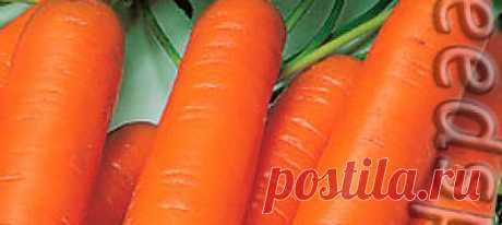 Морковь Лапонька F1, 1 г Великолепная морковь для сока! Сортотип Нантская. Период от всходов до сбора урожая 85 - 95 дней. Форма корнеплода цилиндрическая, тупоконечная, длина...