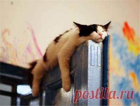 П — пофигизм (12 уморительных фото)