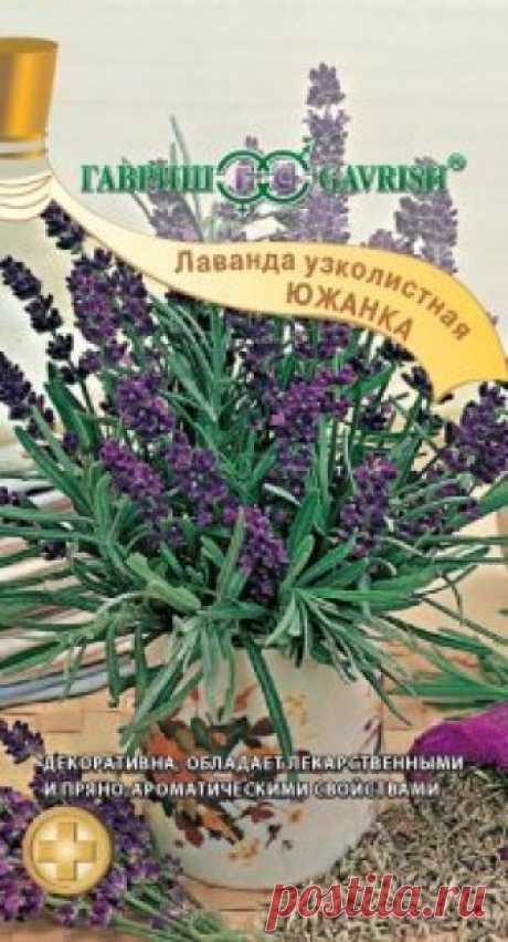 """Семена. Лаванда узколистная """"Южанка"""" (вес: 0,2 г) Всхожесть: 60%. Многолетнее лекарственное, эфирномасличное, пряно-ароматическое, медоносное и декоративное растение семейства Яснотковые. Многочисленные хорошо разрастающиеся побеги образуют куст высотой 50-60 см. Цветоносы с ароматными голубовато-сиреневыми колосовидными соцветиями..."""