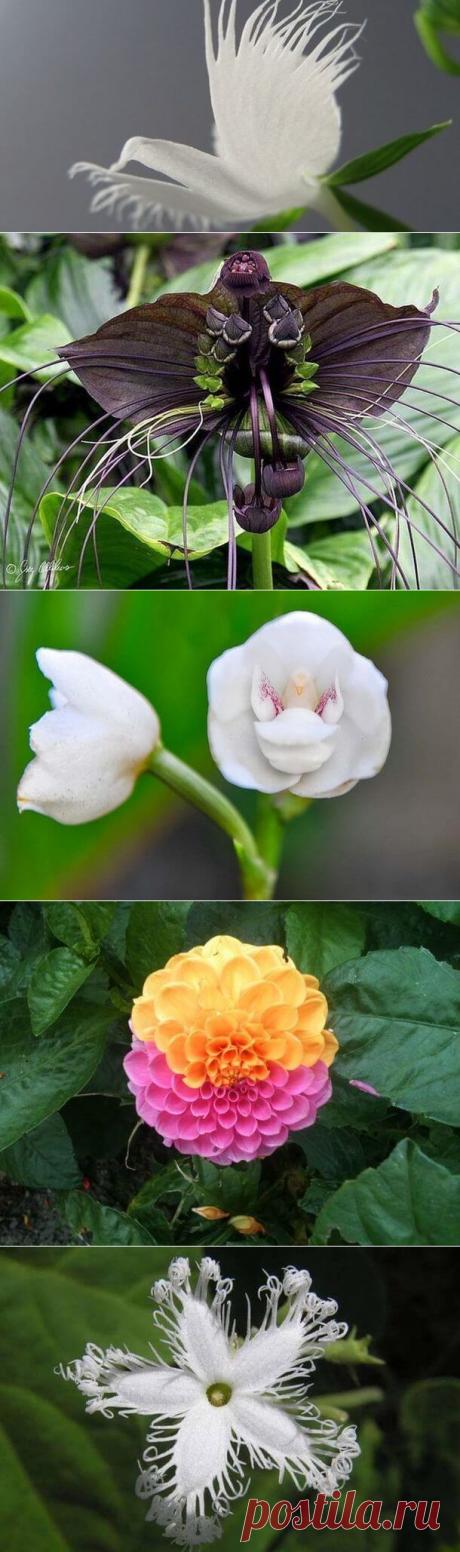 26 очень красивых цветов, вы таких и не видели! | Тысяча и одна идея