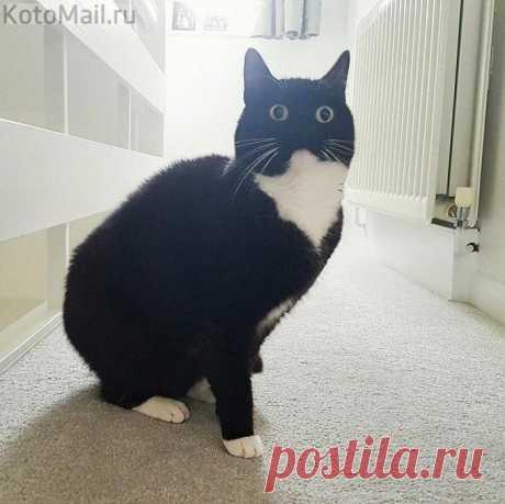 Вечно удивлённый котик по имени Зельда