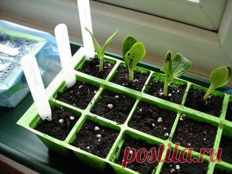 Дрожжи – отличное удобрение для растений.