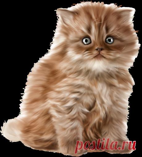Кошки png для вашего творчества!(много! используй прокрутку!!!)