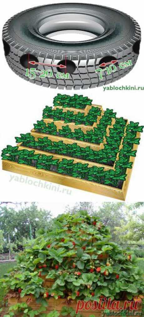 Способы экономии места при выращивании клубники (клубничные пирамиды, клубника в шинах) |