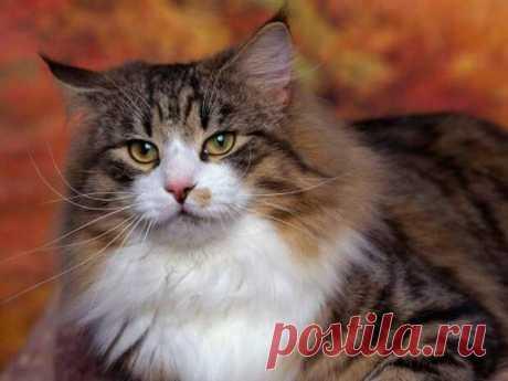 Сколько живут коты и как рассчитать кошачий возраст