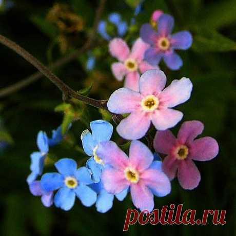 Pinterest (Пин) (1)