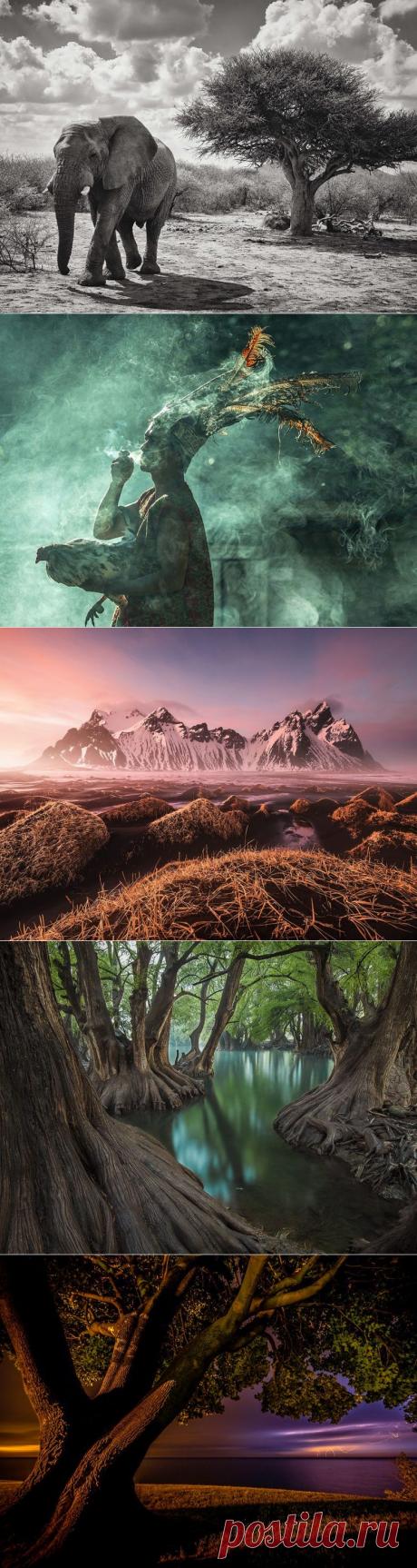 Лучшие фотографии National Geographic в августе / Туристический спутник