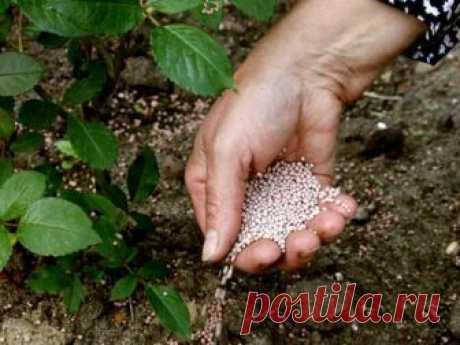 Чем подкормить овощи и кусты для хорошего урожая  В июне каждые две недели растениям необходима подкормка.  Огурцы, тыкву, томаты, перец подкармливают как по листьям, так и под корень. Лучше подкормку проводить жидкими комплексными удобрениями. Мине…