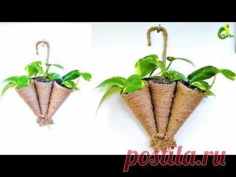 ❤money plant tree/money plant decoration/ORGANIC GARDEN❤