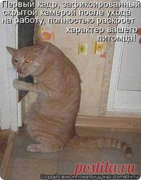 пушистые лапуськи))