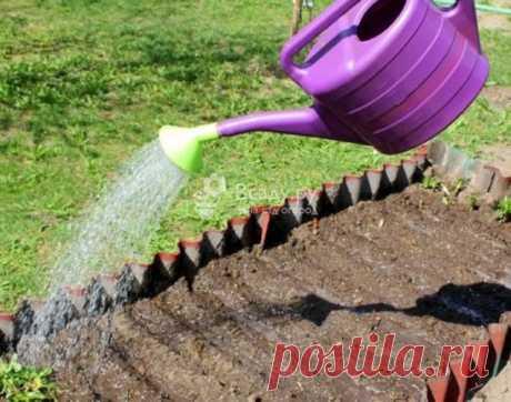 Используем нашатырный спирт в огородничестве  Нашатырный спирт, или аммиак, представляет собой концентрированное азотистое соединение. Применение нашатырного спирта в огородничестве и садоводстве объясняется тем, что азот, столь необходимый всем культурам для наращивания зеленой массы, находится в нашатыре в форме, отлично усвояемой растениями.  К тому же, полив нашатырным спиртом (точнее – его водным раствором), помогает избавиться от большинства огородных вредителей. Так...