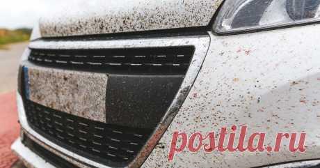 Как и чем лучше избавляться от насекомых на стёклах и кузове автомобиля Ровно через неделю наступит лето, а это значит, что при быстрой езде по трассам автомобиль начнут атаковать насекомые. Очистить от них стёкла и кузов не так-то просто, но мы расскажем, как сделать это своими силами.
