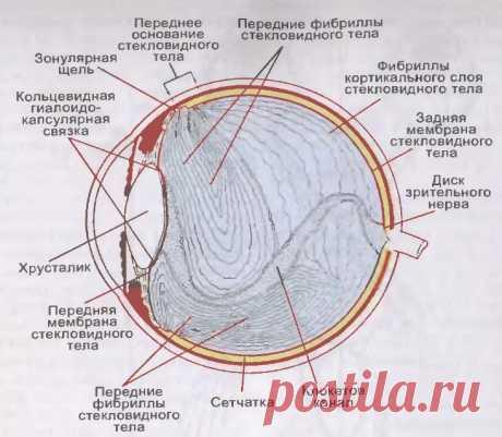 «Летающие мошки» и «стеклистые червяки» в глазах, или откуда берутся «битые пиксели» в стекловидном теле