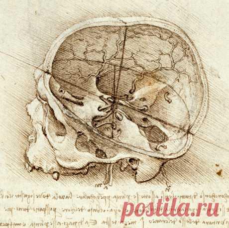 НЕЙРОТОН. Анатомические рисунки Леонардо да Винчи