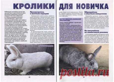 Весна и кролики.