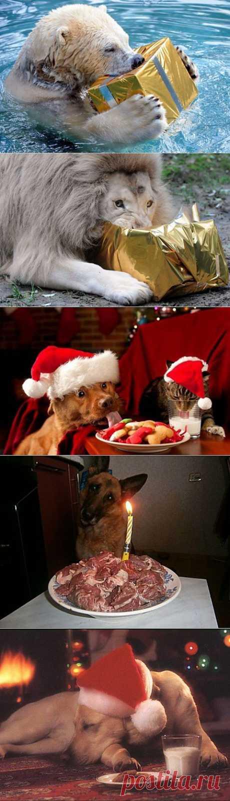 (+1) тема - Рождество в мире животных | Четвероногий юмор