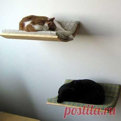 Полки для котов.     И животным удобно, и под ногами не путаются.