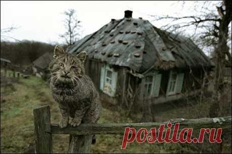 Волшебный кот знахарки