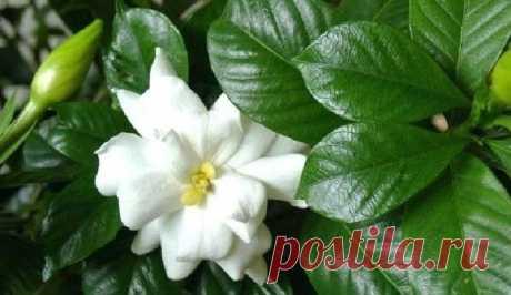 Комнатные растения: как выбрать домашний цветок | Семья и ребенок