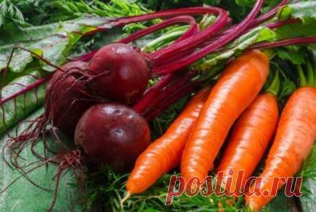 Какую подкормку необходимо внести для моркови и свеклы в открытом грунте в июне