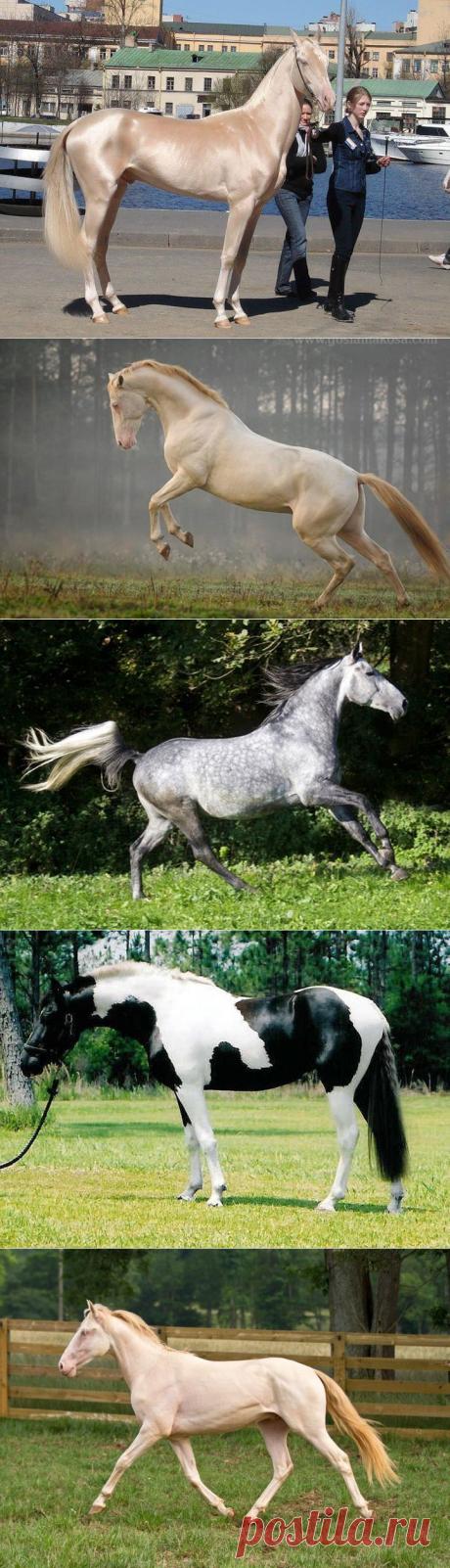 20 самых красивых лошадей в мире, от которых трудно отвести взгляд (21 фото)