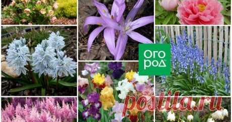 Какие цветы посадить и посеять в августе? Конец лета – это не только время сбора урожая, но и время уделить внимание своему цветнику. Рассказываем, какие цветы можно посадить, пересадить и посеять на клумбу в августе.