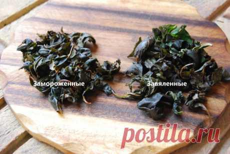 Ферментированный чай из листьев вишни. Сделала двумя способами: делюсь, какой лучше   КАФЕ-ШАФРАН   Яндекс Дзен