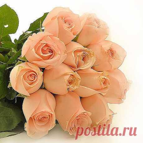 ...розы