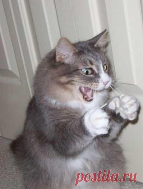 Смешные коты, которые поднимают настроение # 111 | Жизнь усатых и хвостатых | Яндекс Дзен
