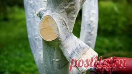 Белим деревья осенью: состав раствора, сроки осенней побелки