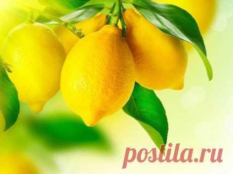 Как и почему нужно использовать весь лимон без отходов | Женские секреты Все просто ... Поместите промытый лимон в морозильную камеру холодильника. После того, как он заморозится, возьмите терку, натрите весь лимон (не нужно
