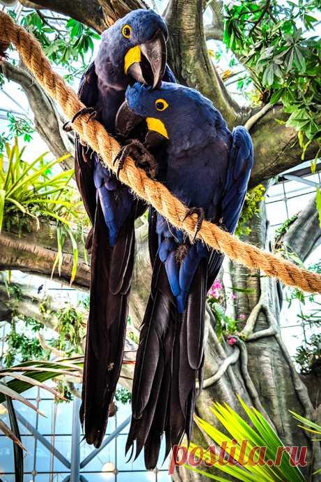 Загадки про попугая с ответами – Онлайн – ladyvi.ru