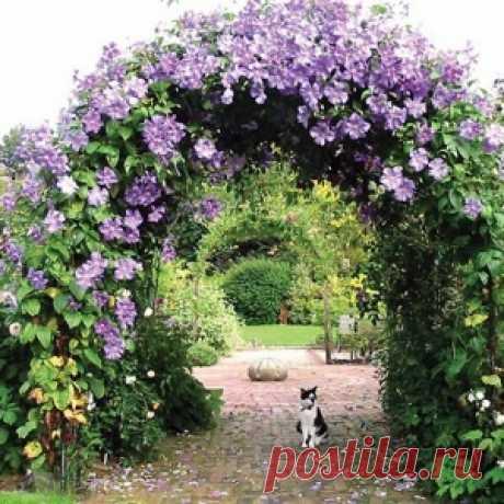 Las pérgolas y el arco: la decoración fina del jardín