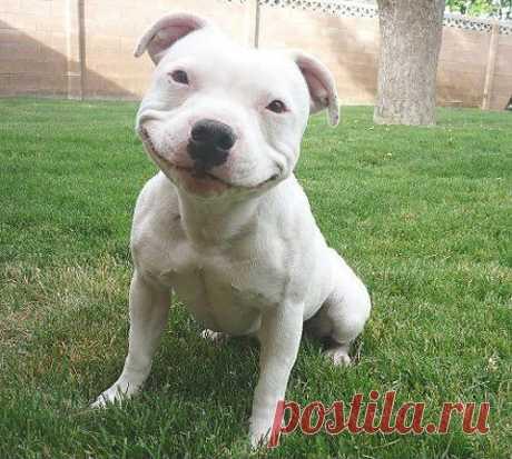 Ridiculously Photogenic Dog - Imgur