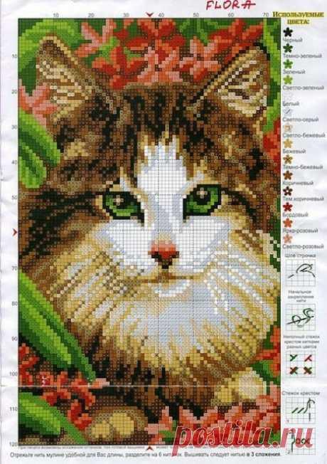 Вышивка или жаккард: котики-очаровашки