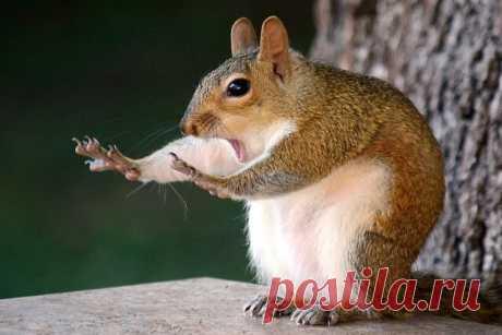 Лучшие смешные снимки дикой природы за 2019 год