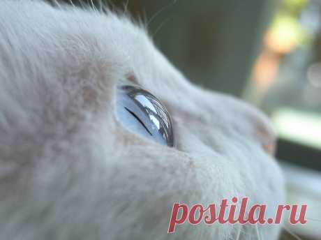 超可愛い猫画像スレ『ハート猫』(=^ェ^=):哲学ニュースnwk