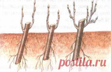 Садовый жасмин осенью: обрезка для начинающих, правила подкормки, полива, особенности черенкования