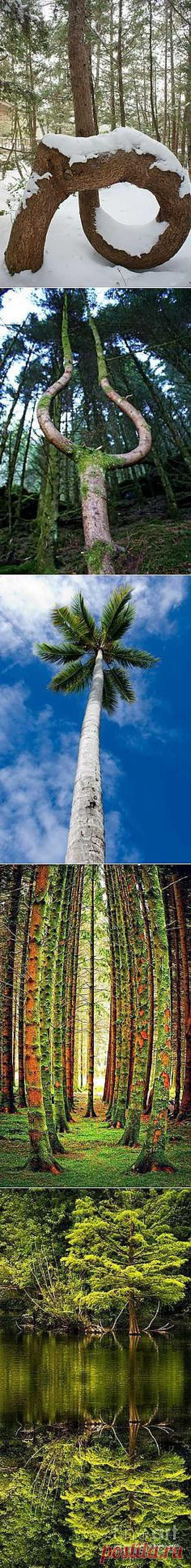 Magestic деревья