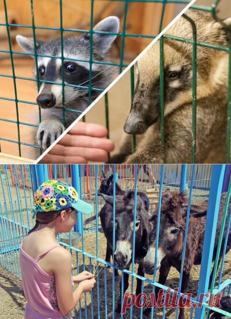 Закон об обращении с животными с 1 января 2020. Мы долго его ждали | PetZona.Ru | Яндекс Дзен