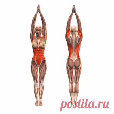 Упражнения для похудения от доктора Бубновского   Golbis