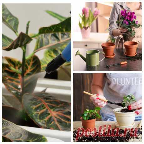 Чем подкормить комнатные цветы – удобрения для роста и пышного цветения   Шепот ветра в саду   Яндекс Дзен