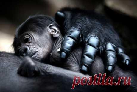 Мама, она и в Африке - Мама! (фото)