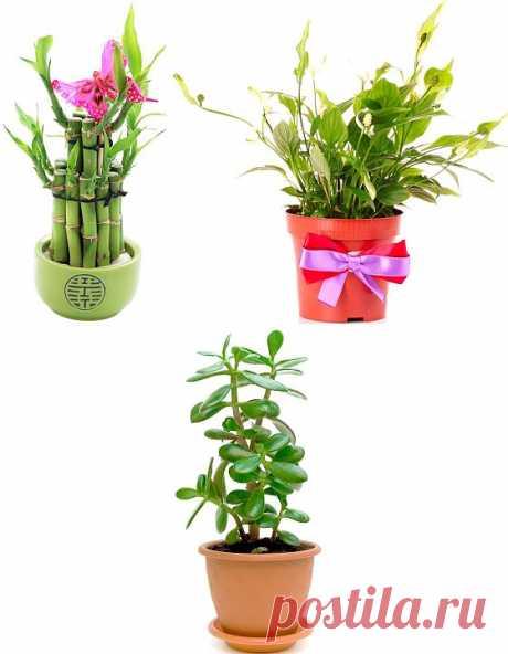 Комнатные растения, приносящие счастье / Universe Women.ru - Вселенная Женщин