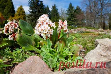 15 зимнезеленых растений для вашего сада