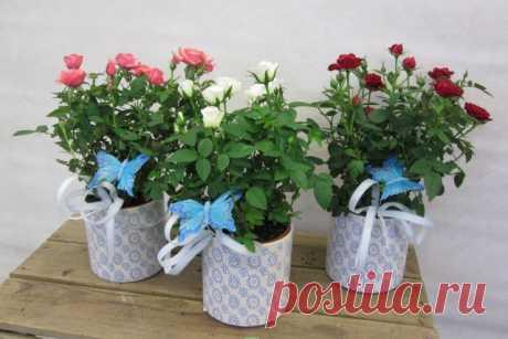 Цветы с отрицательной энергетикой, которые нельзя заводить дома   Полезно (Огород.ru)