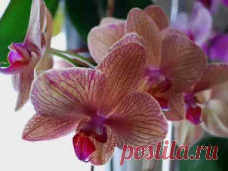 ▶ Musik of Orchids... Музыка орхидей... - YouTube
