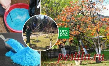 What in a garden and a kitchen garden apply a copper vitriol to? | Put garden (Огород.ru)